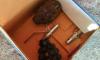 На Васильевском острове ОМОН обследовали найденные гранаты