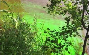 Зеленый пигмент  выдал загрязняющие реку Охту предприятия