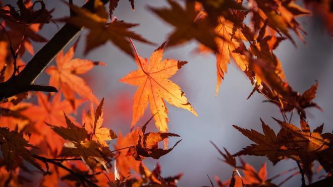 В Петербурге 27 октября сыро, но тепло