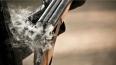 Житель Кубани отстреливал бездомных собак, а убил ...