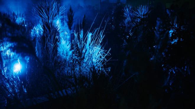 "Выставка ""Сад сновидений"