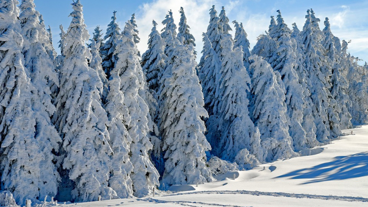 Свыше 700 спецмашин убирают снег с улиц Петербурга
