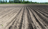 В Ленобласти вручили гранты авторам 20 фермерских проектов