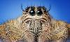 Ученые: пауки могут съесть всех людей на земле за год