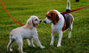 ЗакС поддержали поправки, запрещающие пьяным выгуливать собак