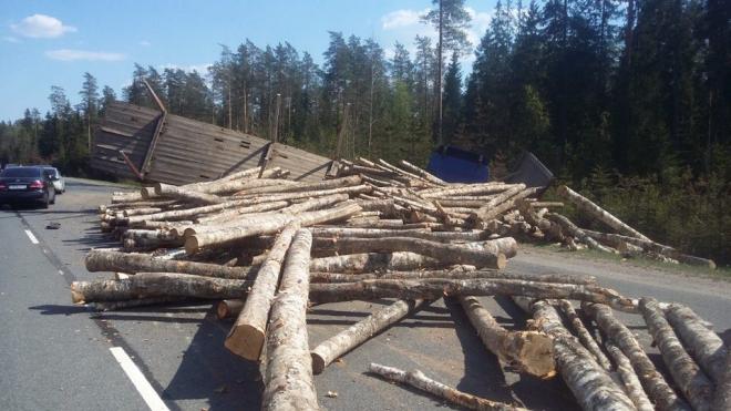 """Пункт назначения на """"Скандинавии"""": вся трасса завалена бревнами"""
