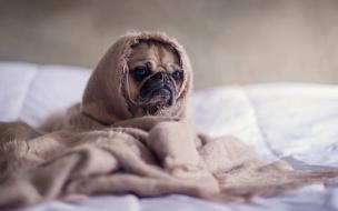 В Петербургезаболеваемость гриппом и ОРВИ приблизилась к эпидпорогу