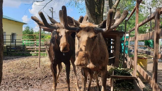 """В РКЦ """"Велес"""" просят помочь со сбором веток и трав для животных"""