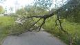 Из-за сильного ветра 31 мая в Петербурге упали 7 деревье...