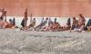 Петербуржцы открыли пляжный сезон 17 мая