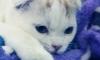 В санатории под Петербургом живодер расстреливал кошек на глазах у детей