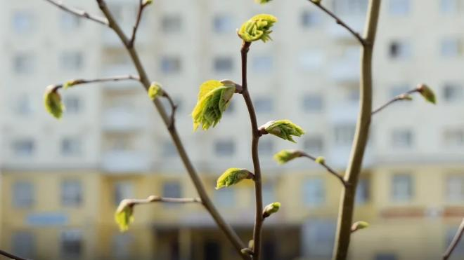 В апрельском Петербурге потеплеет до +17 градусов