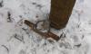 В Павловском парке живодеры ставят капканы на собак: пострадало уже двое животных
