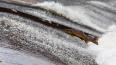 Более 3,5 тысяч молодых лососей выпустили в Неву под Нов...