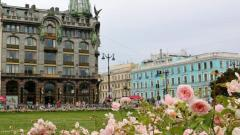 Весной в Петербурге высадят 33 тысячи многолетних растений