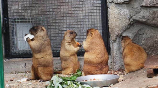 Жители 47-ого региона дали имена суркам в Ленинградском зоопарке