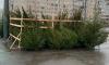 В Петербурге подсчитали ущерб от ёлочных браконьеров в новогодние праздники