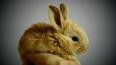 Пьяная компания украла клетку с кроликами из ресторана ...