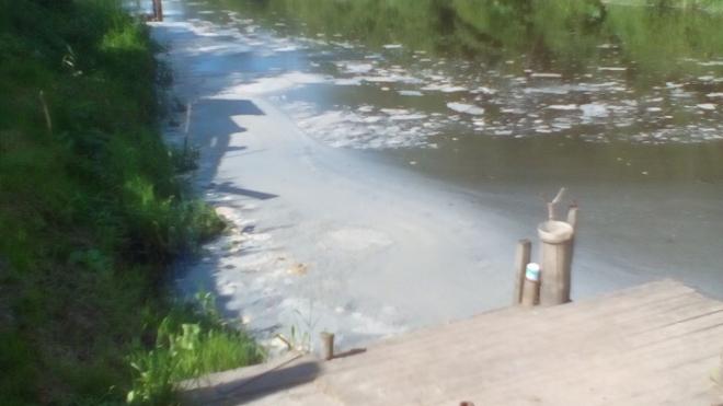 Росприроднадзор возьмет пробы из реки Славянки