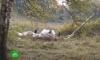 В Тверской области разбился вертолет: двое погибших