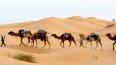 Расцвет криминала: туристические зоны Туниса больше ...