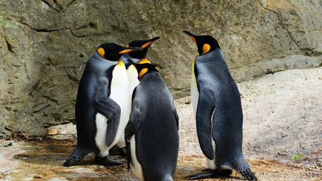 В Антарктиде обнаружены сотни мумий вымерших пингвинов