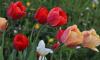 В майские праздники будут работать дежурные службы Выборгского района