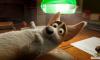 Кинотеатры объявили бойкот российскому мультфильму из-за решения Минкульта