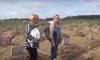 Безымянное кладбище под Колпино: что стало известно за две недели