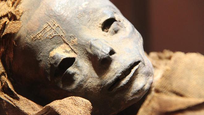 В Тосненском лесу мужчина обнаружил мумифицированный труп
