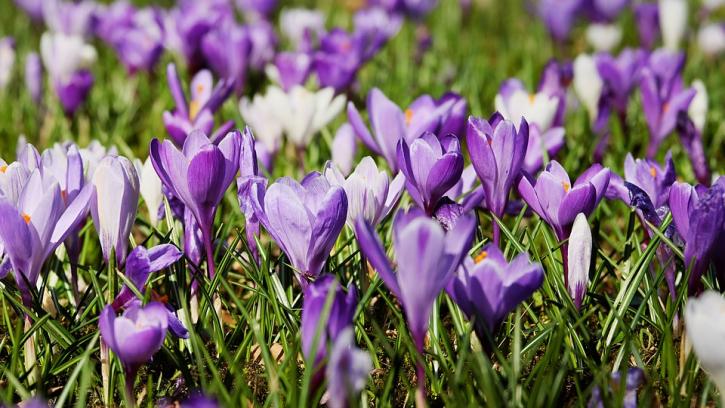 Петербург весной украсят полмиллиона цветов и более 5,5 тысяч деревьев