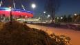 """Вместо вырубленных у """"Газпром Арены"""" елей высадят новые"""