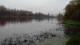 Химия или тротил: мертвая рыба в Охтинском разливе ...