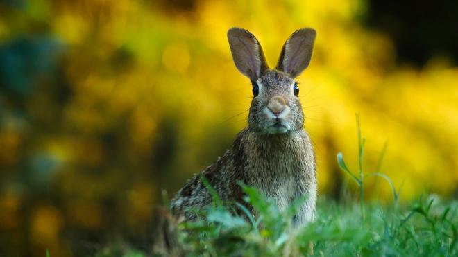 В Тосненском районе псы напали на мини-ферму с кроликами