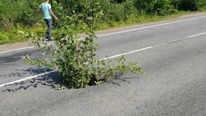 По дороге в деревню, где жила теща Медведева, провалился асфальт