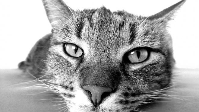 В Новом Уренгое кот стал причиной падения маленькой девочки с 9 этажа