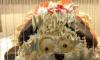 Петербургский торт в виде собачки напугал женщину
