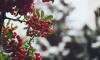 В среду в Ленобласти потеплеет, но продолжит идти мокрый снег