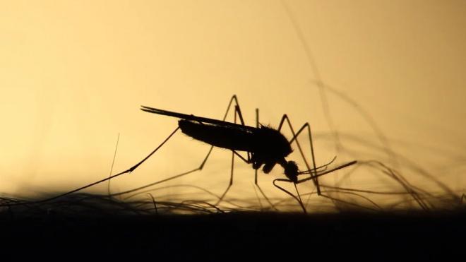 В Петербурге сократится количество комаров из-за аномально теплой зимы