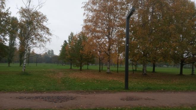 В парке им. Сахарова вырубят деревья для устройства подъезда к новому спорткомплексу