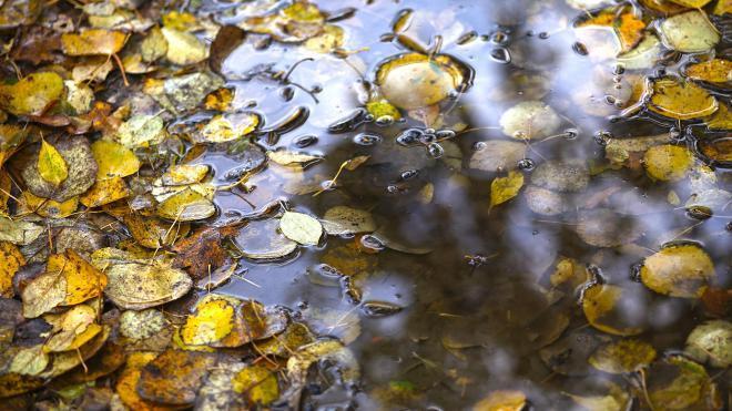 В Петербурге 8 октября будет тепло и дождливо