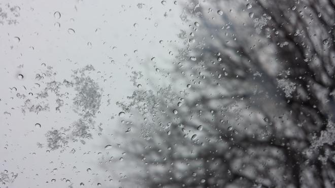 В Петербурге в субботу ожидается небольшой дождь