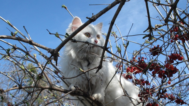 Кот застрял на дереве около Дворцовой площади