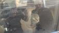 Бездушные петербуржцы заперли кота на четыре дня в душно...