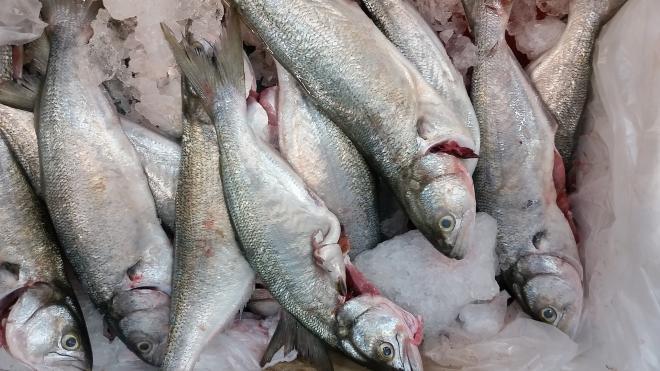 В петербургском порту выборочно проверили более пяти тонн рыбы
