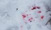 Во Всеволожском районе мужчина погиб от удара ножом в висок