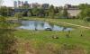 В небольшом водоеме утонул житель Купчино
