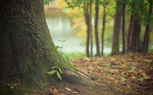 В лесу возле деревни Кути нашли труп пропавшего без вести мужчины