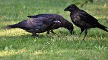 Неизвестные издевались над птицами у жилого комплекса на Лени Голикова