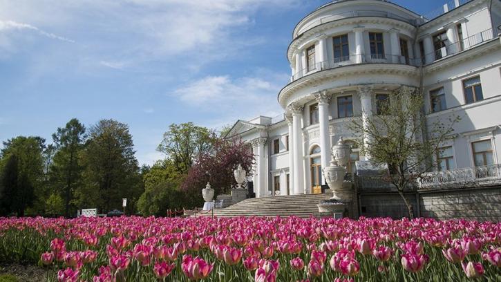 Фестиваль тюльпанов состоится на Елагином острове